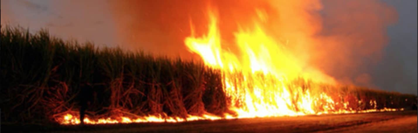 Photos provided by Sierra Club's Stop the Sugar Field Burning Campaign